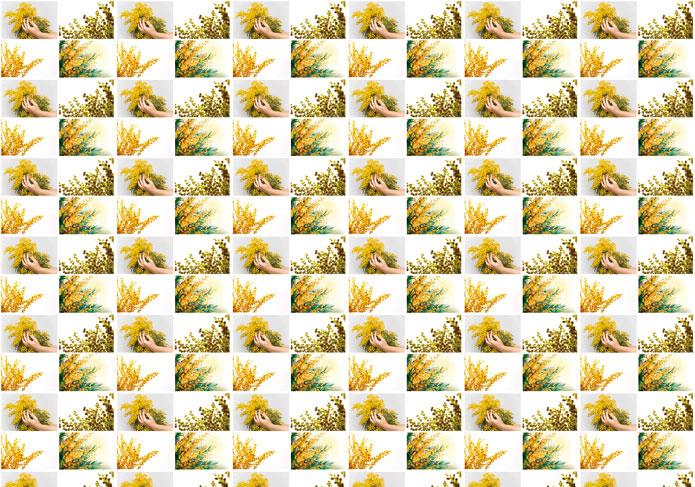 carta da regalo festa della donna con mimose