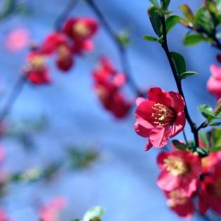 rose papername